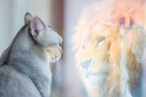 kat-en-leeuw